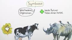 Thema Symbiose